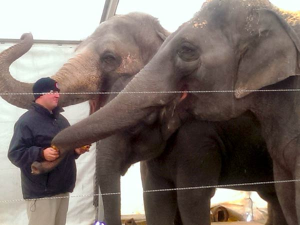 Joey Frisco, 30, elephant handler at Ringling Bros. Circus. feeds several female Asian elephants inside their climate-controlled tent in the parking lot of Lincoln Financial Field.