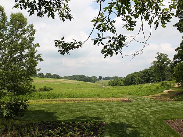 Longwood Gardens is offering guided tours of its new meadow on select days and times from June 21 through Aug. 26. (Michael Bryant/Staff Photographer)