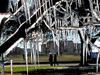 Icicles hang from a tree in New Orleans on Saturday. (AP Photo/Judi Bottoni)