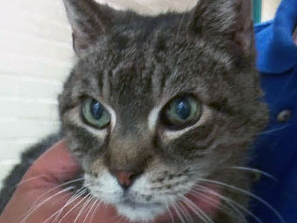 The Daily News Pet of the Week is Mikey, an 18-year-old cat at the Pennsylvania SPCA.