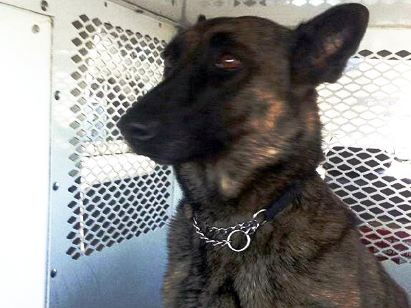Philadelphia police are looking for BiBi, a police K-9 that escaped Friday night from the backyard of an officer´s home.