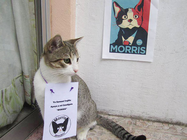 Morris the cat is running for mayor in Mexico.