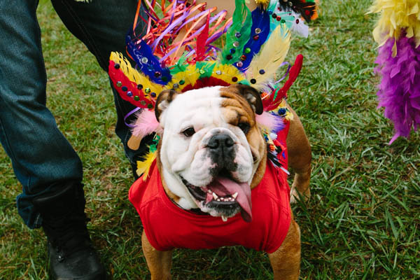 The Philadelphia Welfare Society´s annual Mutt Strut returns on Saturday, Oct. 24