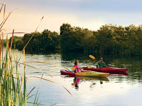 Kayaking in the Gulf Coast Everglades; in addition to the chichi life, outdoor adventures in the Naples area are plentiful. With an average January temperature of 76, Naples reliably has some of the best wintering weather in the nation.