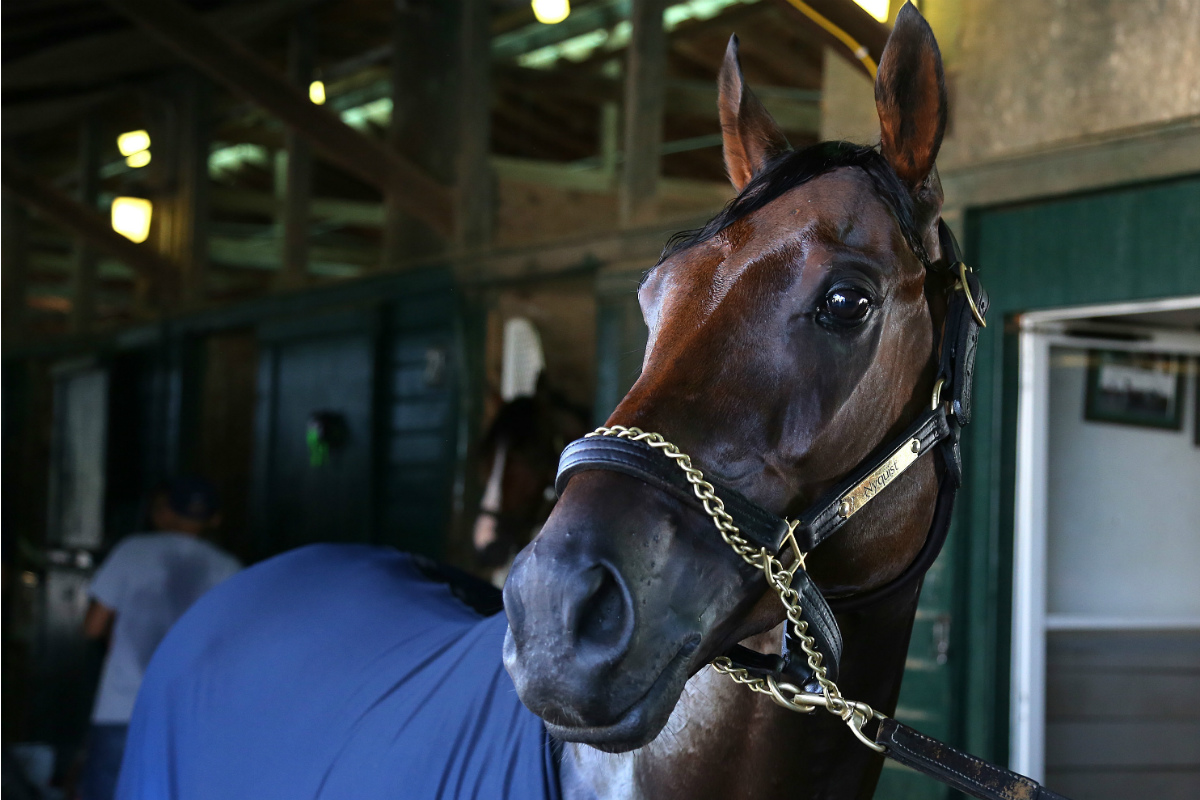 Nyquist could win the 3-year-old championship with a win in the Pennsylvania Derby at Parx on Sarturday.