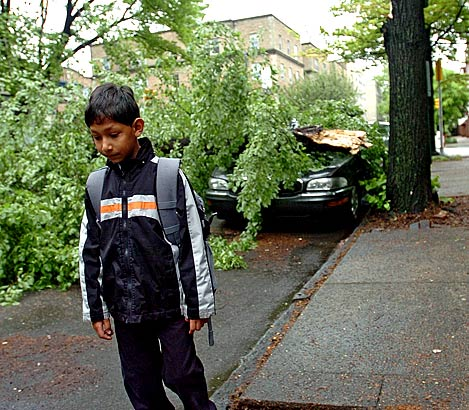 Seven-year-old Zahli Bhayroo - and his parents - got a surprise this morning when he came out of his University City house to go to Penn Alexander Elementary School and found that a tree limb had fallen on the family car at the corner of 45th and Spruce Streets.