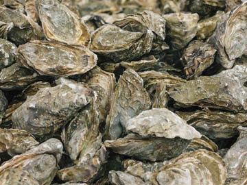 oyster sex personals Why oysters and chocolate don't boost your sex drive - as studies find most   increase your libido - and it means you don't have to feast on oysters  as they  board a private jet in la pair began dating earlier this summer.