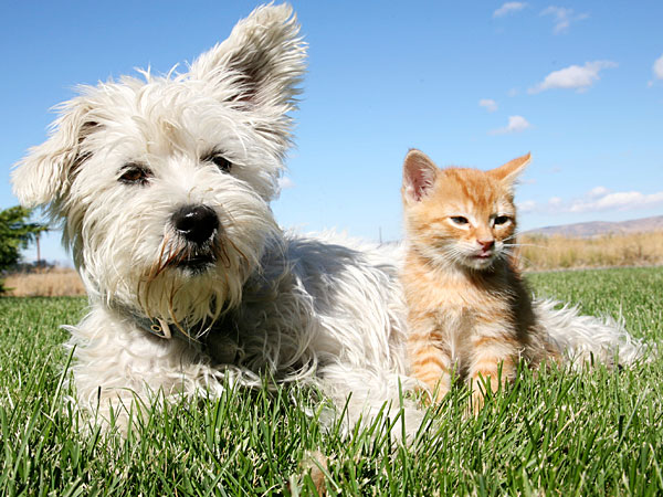 How to tame your spending and still provide the best for your furry friend. (iStock image)