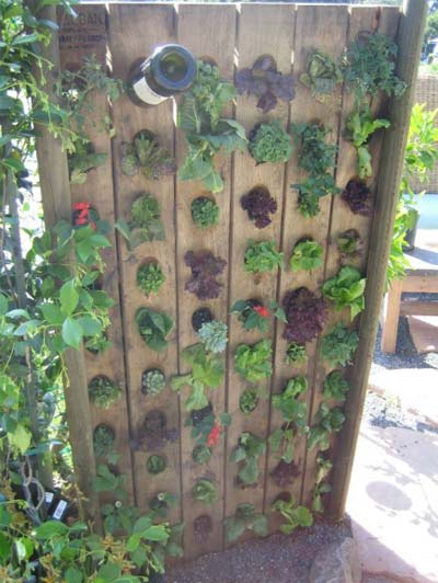 Creative Garden Ideas Creative garden ideas found on pinterest philly for urban gardeners or those looking to spruce up a plain wall this rack is perfect for plants that need a lot of drainage for more landscaping ideas workwithnaturefo