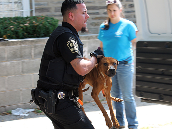 Pennsylvania SPCA humane law enforcement officers rescued three dogs from a West Oak Lane home on Aug. 27, the organization said.
