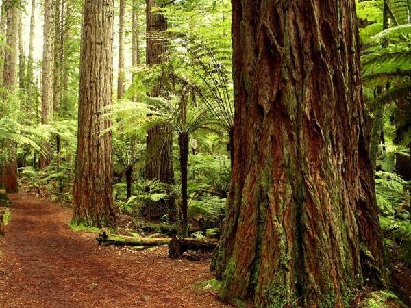 Forest in California.