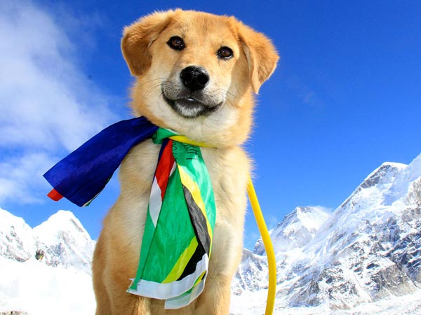 Rupee is the first dog to ever climb Mt Everest.