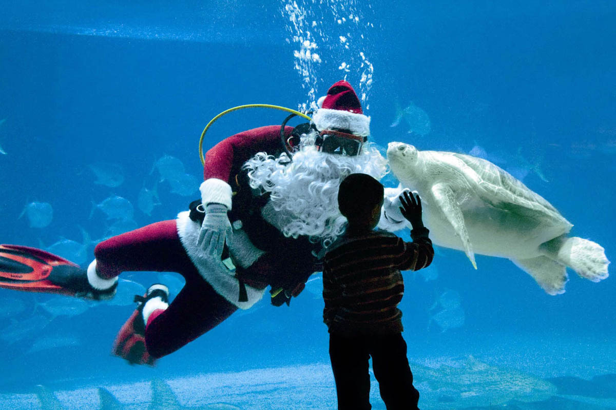 Adventure Aquarium begins its Christmas celebration on Dec. 4 through Dec. 31.