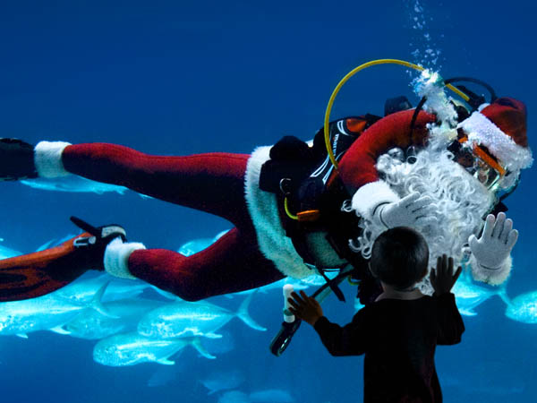 Christmas comes early with summertime Christmas in July events. (Photo via Adventure Aquarium)