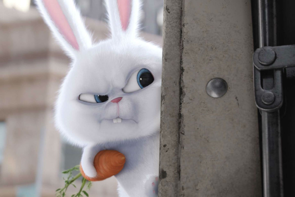 The Secret Life Of Pets Louis C K And Kevin Hart In