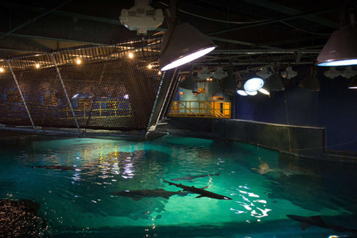Walk Above The Water At Adventure Aquarium 39 S Shark Bridge