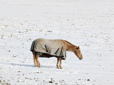 Swaddled in its winter warmest, a horse grazes as best it can in a snow-covered field - one unlikely to be bare any time soon - in West Fallowfield, Chester County. (Laurence Kesterson / Staff)
