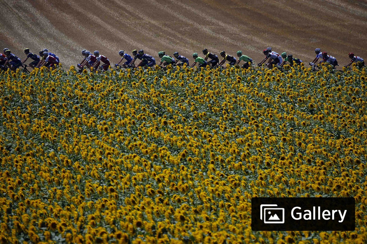 The pack passes a field of sunflowers during the fourteenth stage of the Tour de France cycling race over 181.5 kilometers (112.8 miles) with start in Blagnac and finish in Rodez, France, Saturday, July 15, 2017.