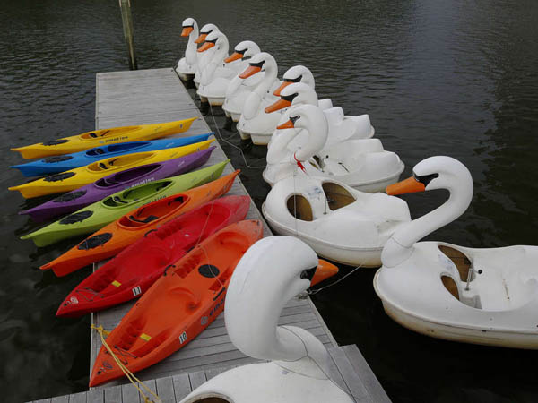 Swan boats are lined up in a row near the Independence Seaport Museum at Penn´s Landing. ( MICHAEL S. WIRTZ / STAFF PHOTOGRAPHER ). May 8, 2013.