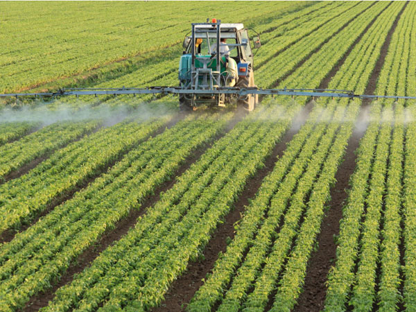 Tractor spraying spinach field.