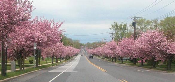 things with kids free pennsylvania cherry blossoms philadelphia