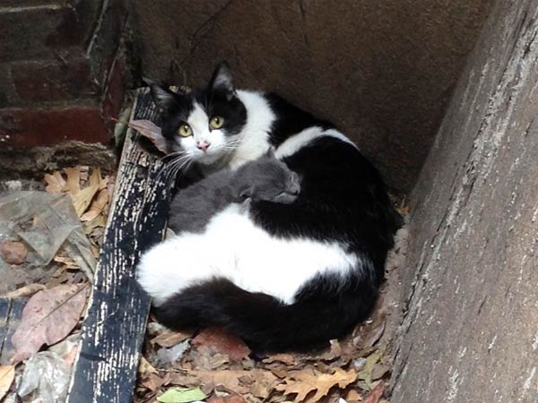 Former stray Vera cuddles her kittens in the Mütter Museum´s Medical Garden. (Photo via the Mütter Museum)