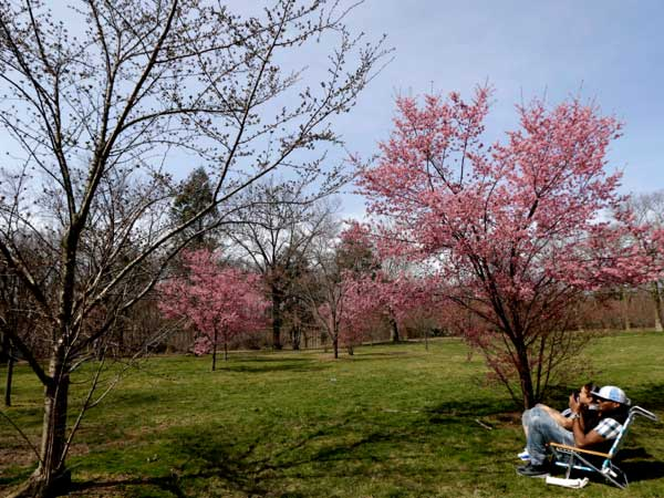 A couple relax on chairs near a cherry blossom tree at Branch Brook Park, Tuesday, April 9, 2013, in Newark, N.J. Warm weather is expected this week, after the northern New Jersey region experienced frigid temperatures during the first couple of weeks of spring. (AP Photo/Julio Cortez)