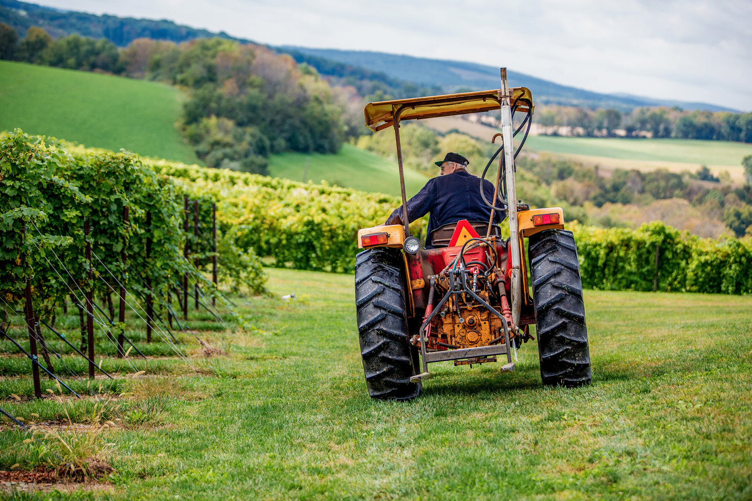 Calvin J Troxell, a fifth generation farmer at Galen Glen Winery in Andreas, PA brings bins of wine from the vineyard to crush for harvest. (Courtesy of Galen Glen Winery)