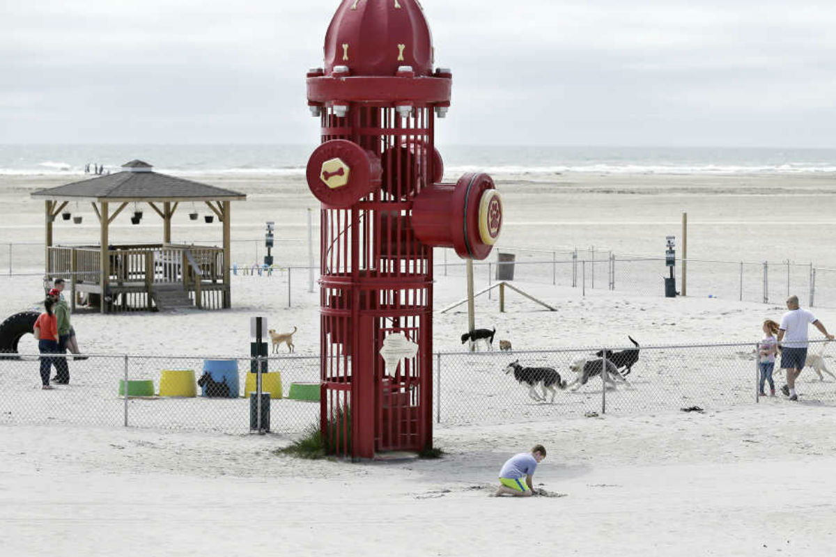 Wildwood Nj Dog Beach The Best Beaches In World