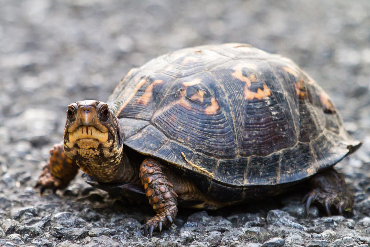 Another outbreak of salmonella, this time in pet turtles ...