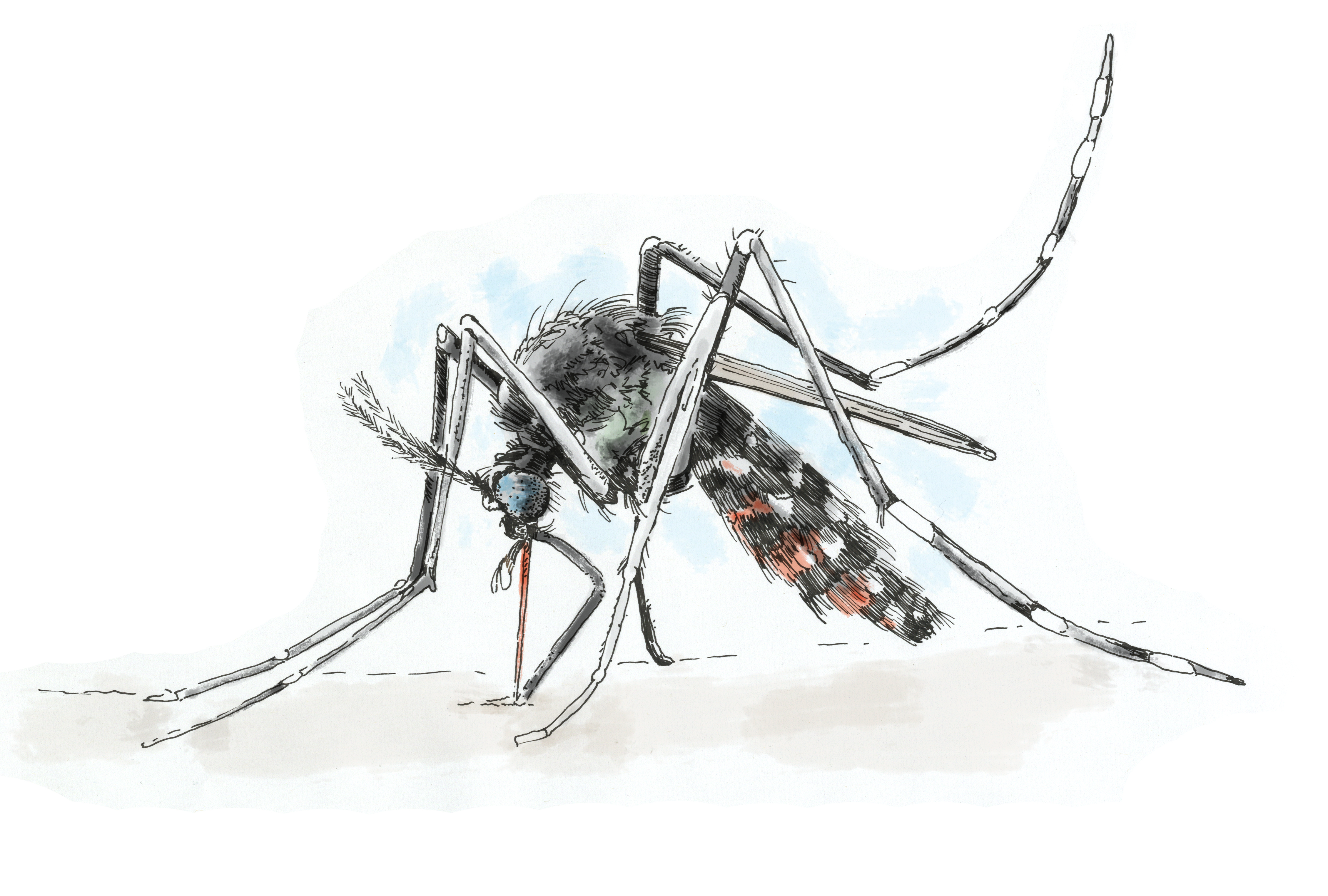 Could this mosquito bring Zika to Philadelphia?